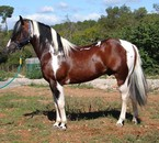 passion de chevaux !!