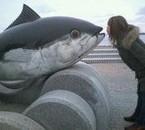 j'aime les poissons >.<