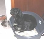 Attila, le chien de ma meilleure amie