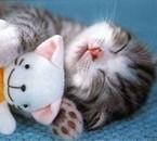 comme vous le voyez si bien jadorrrrrrrre les chat!!!