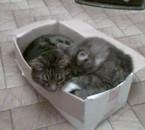 mes deux chats dans leur carton leur nouveaux domicile