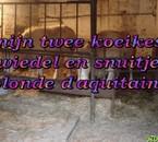 Twiedel en Snuitje !! Blonde d'aqitaine