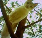 tjr mon chat...