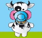 I love cow <3