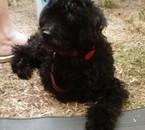 Titus mon chien