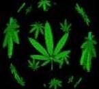 Skank,Sensi,Weed,Marijuana,Cannabis...