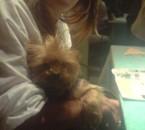 Chanel, Un amour de chien =)