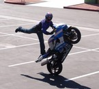 pauly stunt 2
