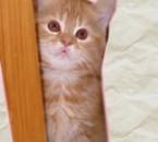 mimi la chatte