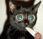 fumer tue !!