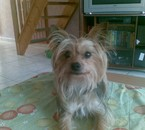 franklin le chien de mon pere