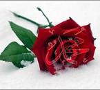 محمد صلى ا&#