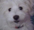 yamapi mon chien