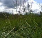 après midi dans un champ...
