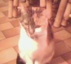 mon 2ème chats yaya