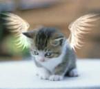 **********une tres belle chatte*********