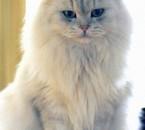 chat  plein de charme