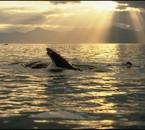 la mer et les cetaces
