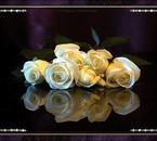 les fleurs toujours un plaisir pour les yeux