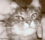 mon chat!!!!!!!!!!!!