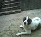 sa c mon chien