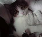 mn chaton