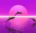 dauphinavc un ciel rose
