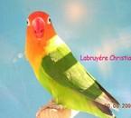 un de mes oiseaux