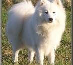 le chien de mes rêves