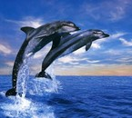 ma passions les dauphins
