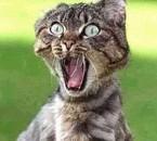 un chat bizare lol
