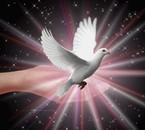 la paix!!!!
