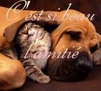 l amitié!!!!!!!!!