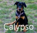 voila ma chienne elle sapelle calypso et c un beauceron