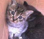 mais chats