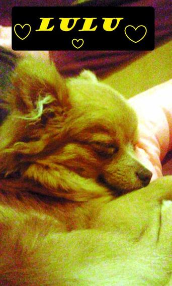 Mon chien <3 :)