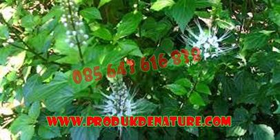 Pengobatan Herbal Produk Denature