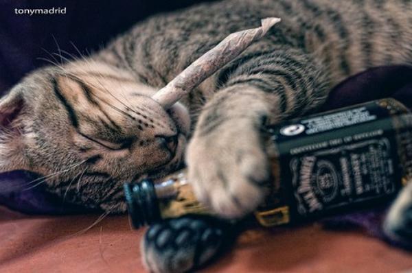 bien le chat a sa mémére !!!
