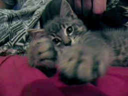 Xena joue avec mon appareil photo