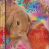 Oyuugi Wagamama Dan X【PaRADEiS】