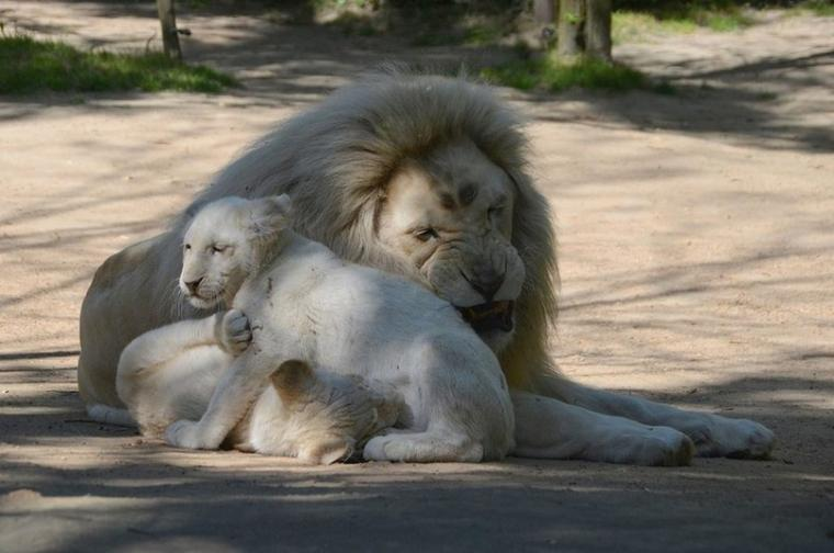 papa et ses enfants
