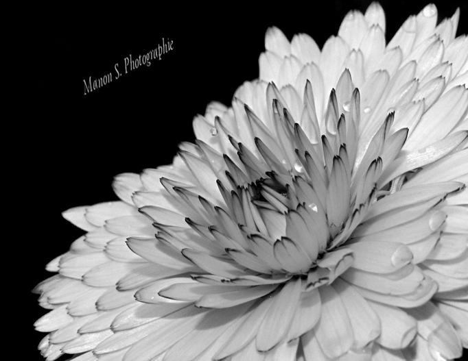 Fleurs²