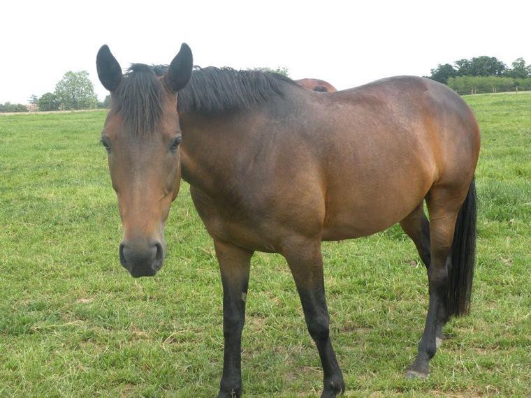 Les chevaux au club