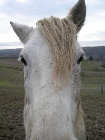 . . .  Juste Un cheval . . .