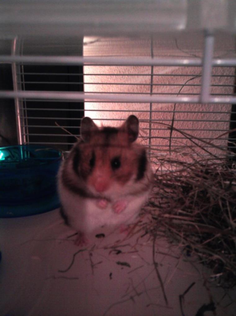 Voici Fripouille!!!