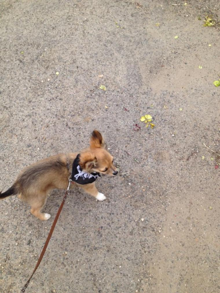 Iron en balade avec son petit bandana :)