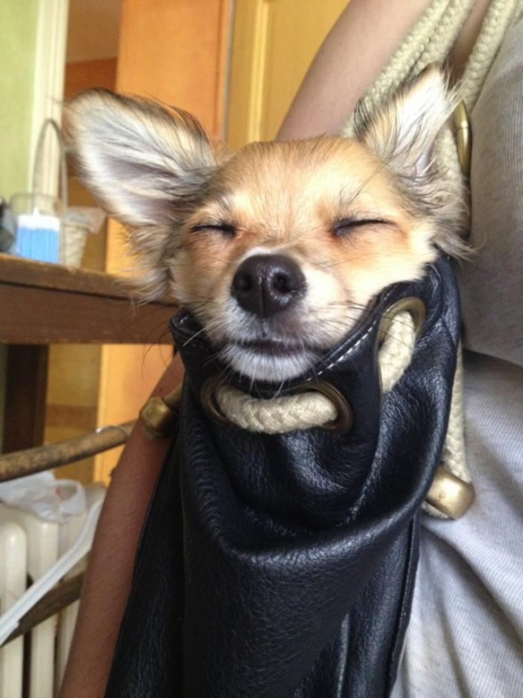 Iron dans son sac pour allez a la brocante dimanche :)