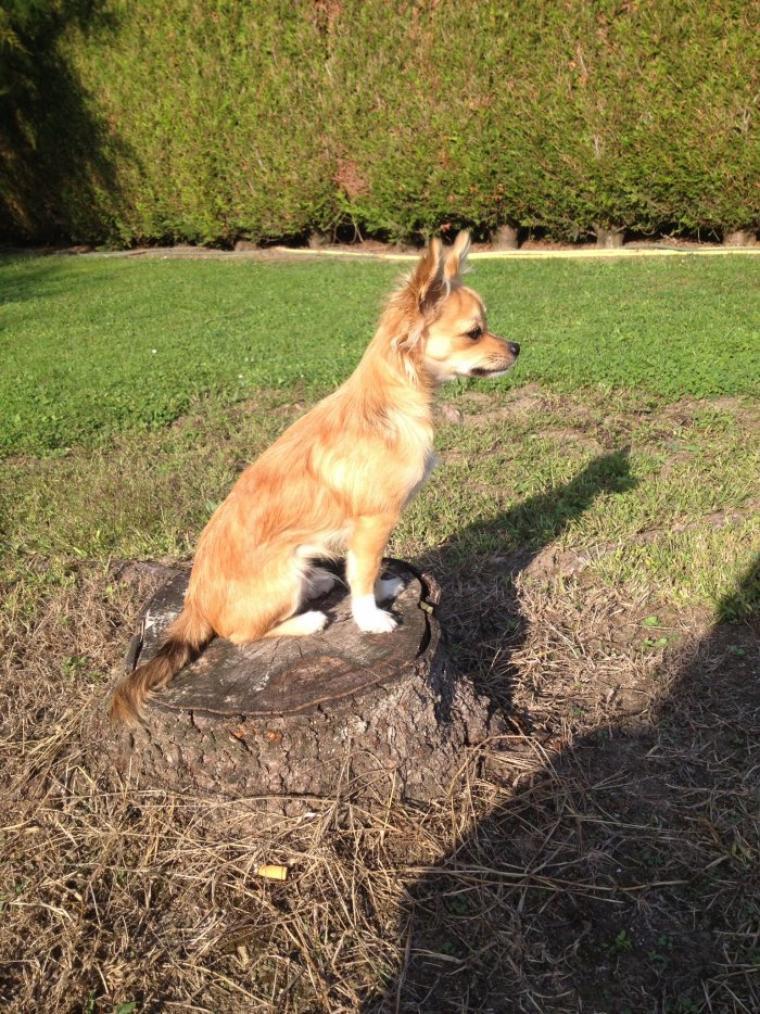 Iron sur son tronc d'arbre préférer :)