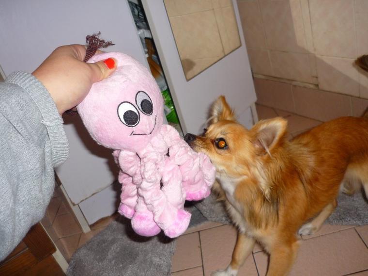Les Achat pour Iron dans la boutique Cherry Dog :D Partie 2 ! Le shampoing caramel ! et bébé pieuvre :P