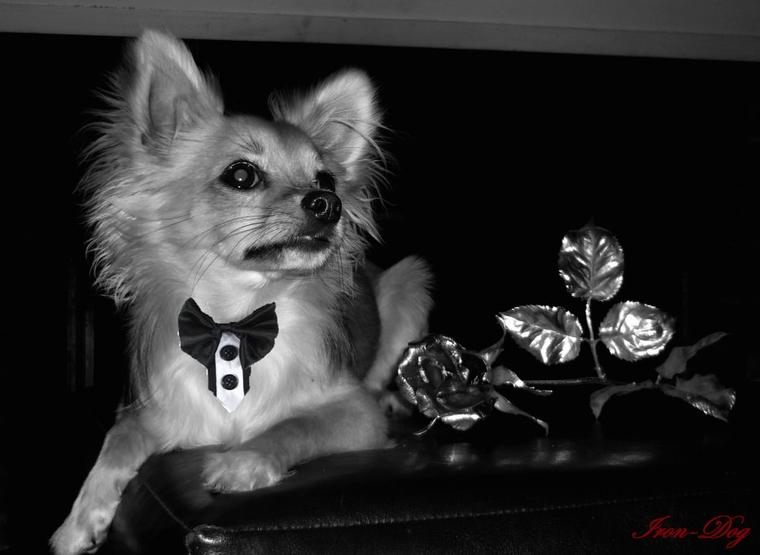 Iron en Mode Beau Goss :D Iron le Dog-Model :P